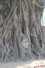 Buddha face in tree.